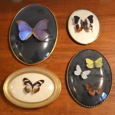 Série de 4 cadres papillons